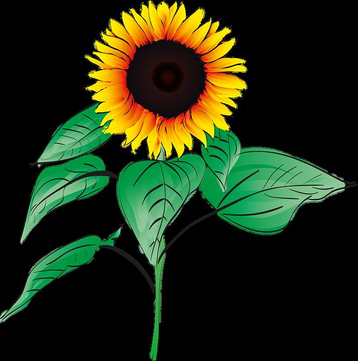 Darmo Grafika Wektorowa: Sun Flower, Lato, Roślin, Ogród