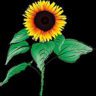 Yellow flowers vector graphics pixabay download free images sunflower summer plant garden flower orang mightylinksfo