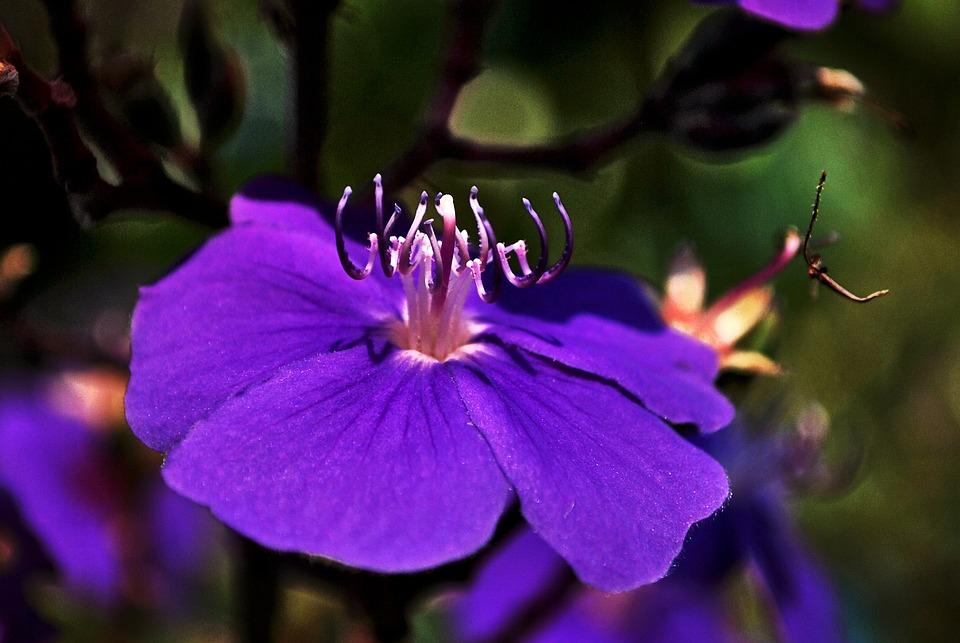garten blumen lila, lila violett blume · kostenloses foto auf pixabay, Design ideen