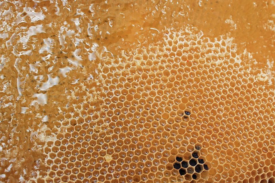 kostenloses foto bienenwabe honigwabe honig