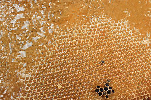 Honeycomb, Honey, Delicious, Sweet