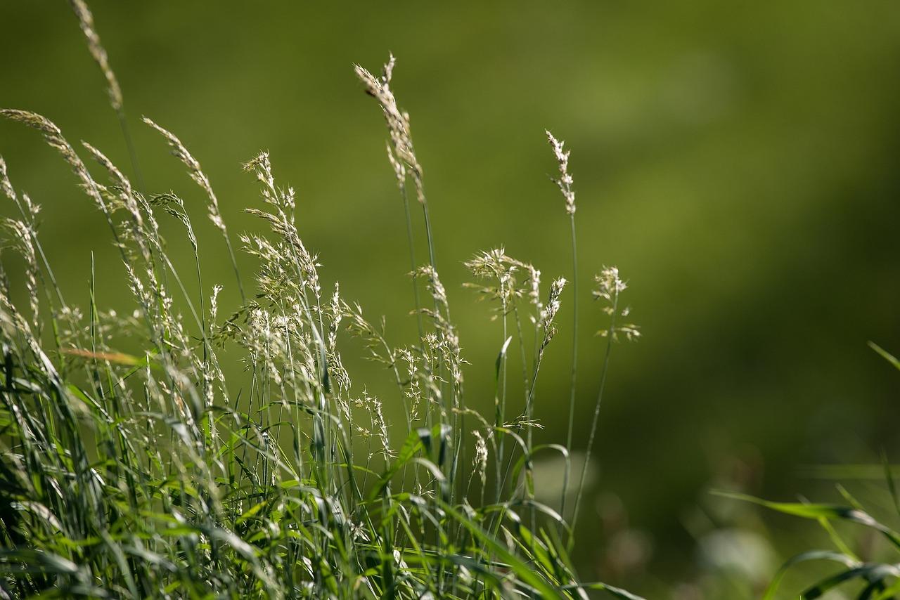том, что травы которые растут на лугу фото псевдоним полностью отражает