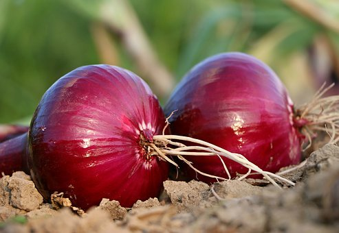 Onion, Why, Roots, Land, Blue, Salad