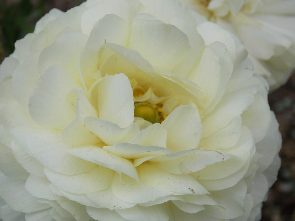 Gardenia Flower, White Flower, Wedding Flowers