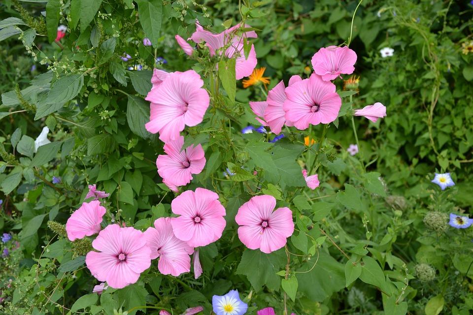 Colorful Variety Flowers Beautiful Free Photo On Pixabay