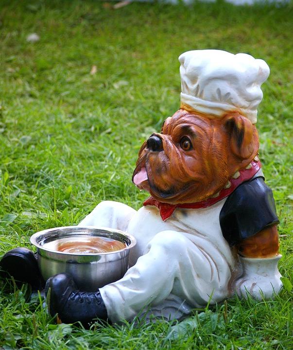 Fütterungsfehler beim Hund vermeiden.