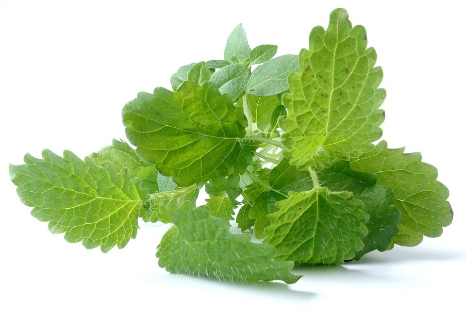 大葉の育て方と特徴(緑黄色野菜)・収穫期と育てるときの注意点