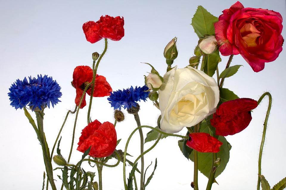 flowers-1567800_960_720.jpg