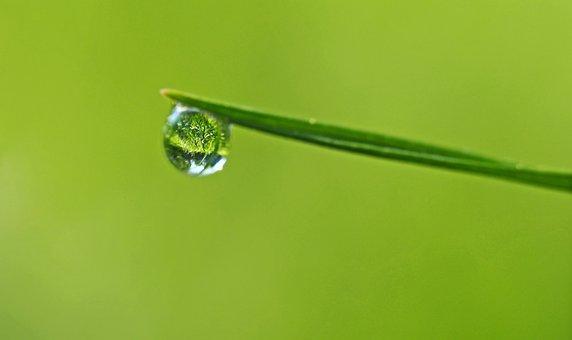 Mirror In A Drop, Grass, Meadow