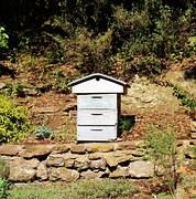 kostenloses foto imker zucht aflegger bienen kostenloses bild auf pixabay 985082. Black Bedroom Furniture Sets. Home Design Ideas