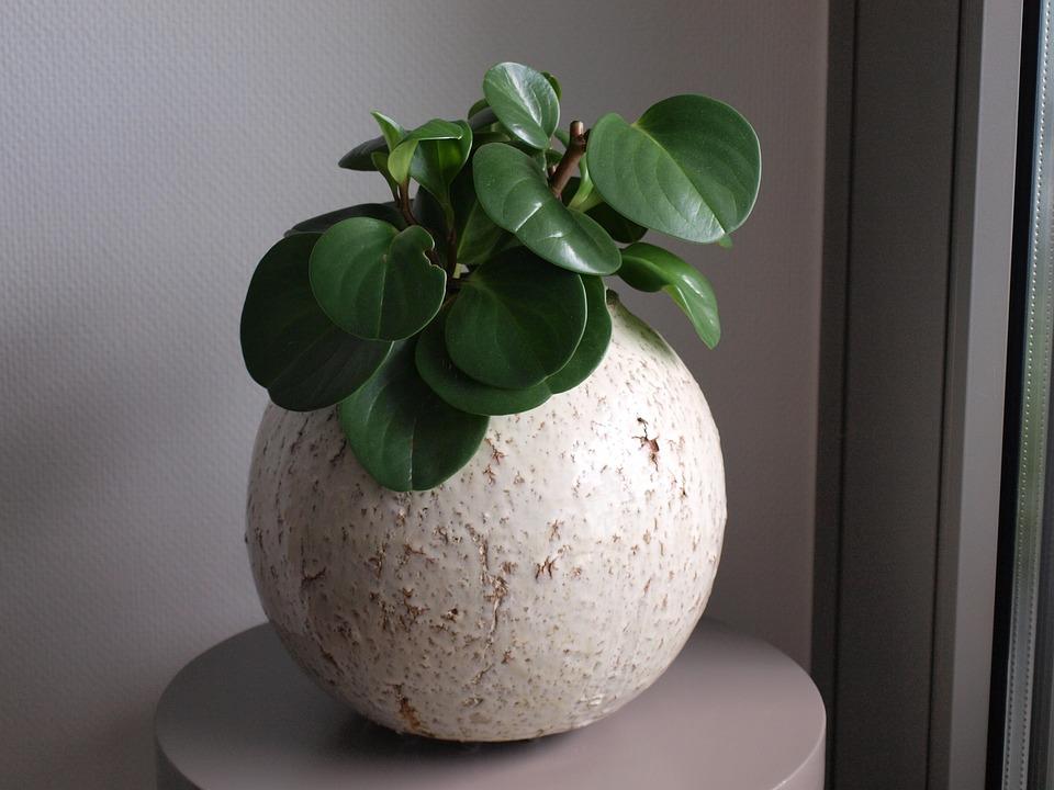 Potten Voor Planten.Plant Pot Potten Gratis Foto Op Pixabay