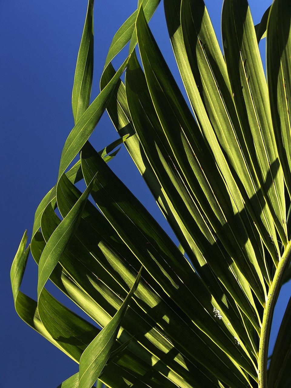 фото листья пальмы