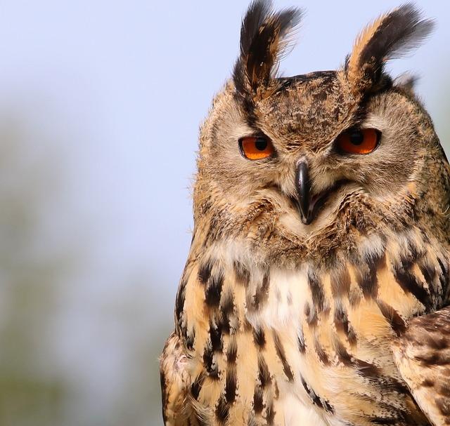 Free photo: Eurasian Eagle Owl, Owl, Bird - Free Image on ...