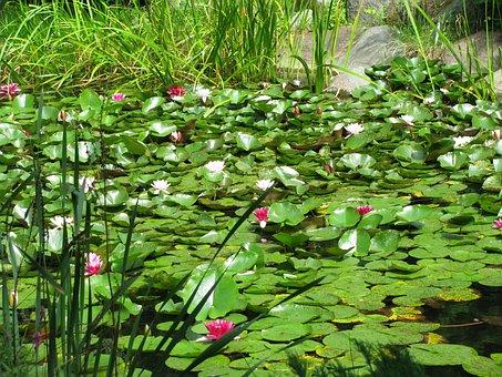 Flowers, Water, Foliage, Lichen, Pond