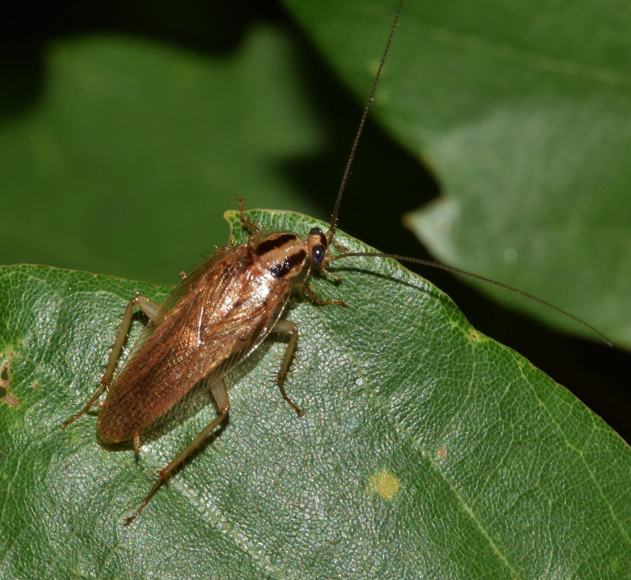 подарю тараканы фото лесные ярких вспышек могут