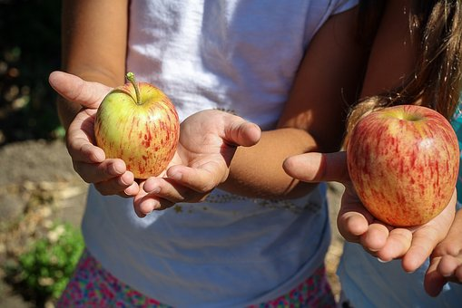 Apple, Picking, Children, Hands, Fruit