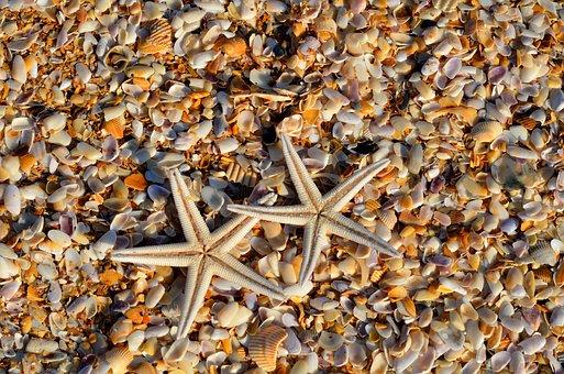 Étoile De Mer, Sea Life, Des Animaux