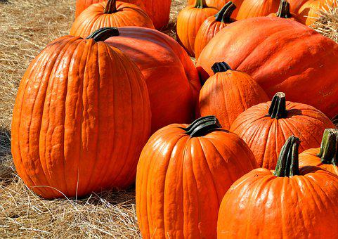 Image of pumpkins.