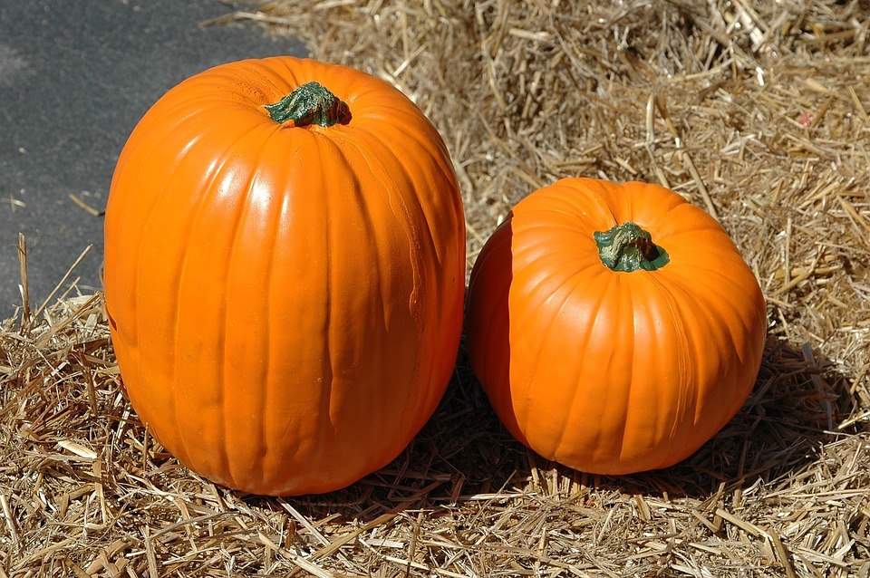 pumpkin pumpkin farm halloween autumn fall harvest - Farm Halloween