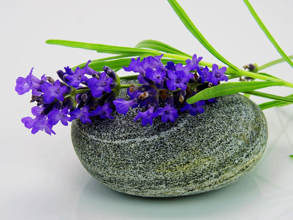 free photo lavender, flower, purple, nature  free image on, Natural flower