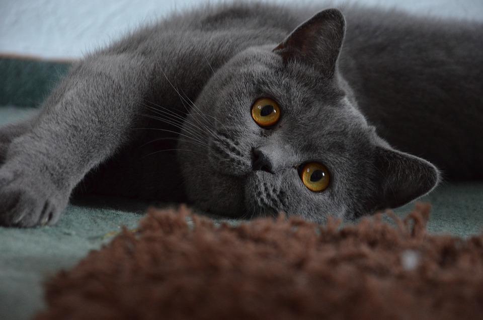 Piks mačička Consuelo Duval porno