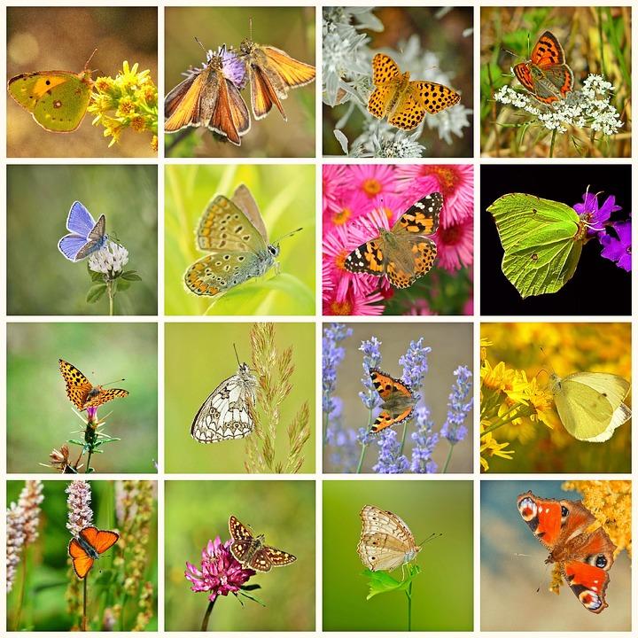 43 Koleksi Gambar Hewan Dan Tumbuhan Untuk Kolase HD