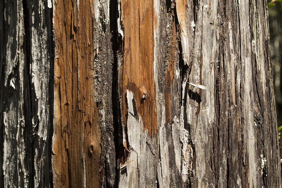 Meleze Bois Texture Photo Gratuite Sur Pixabay