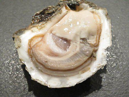 Oyster, Seafood, Danish
