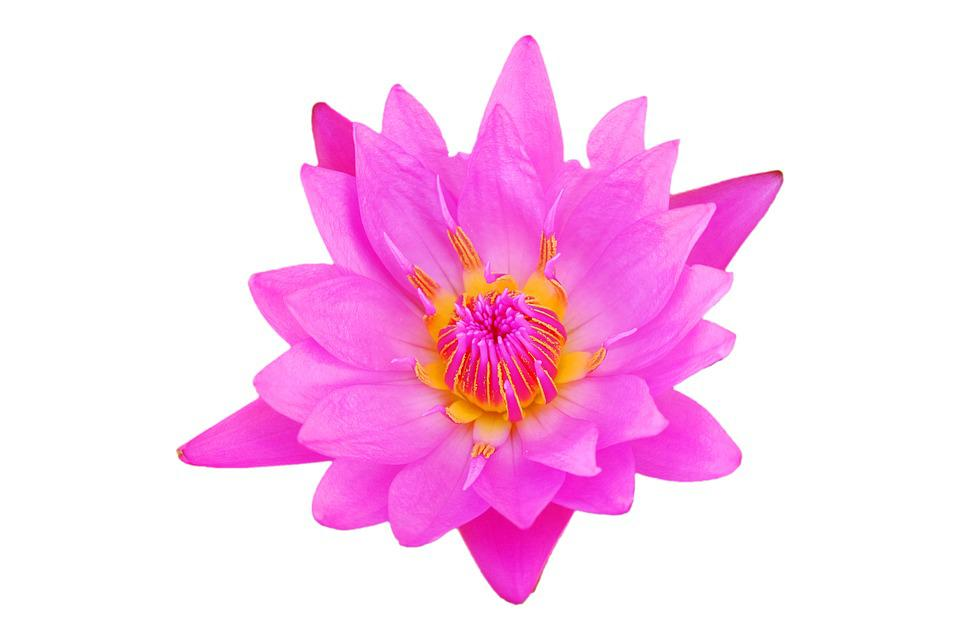 Flower Pink Flowers Free Photo On Pixabay