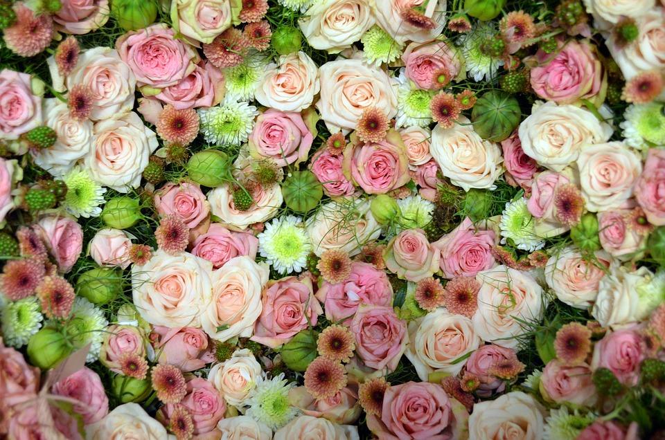 Blütenmeer Rosa Romantica Foto Gratis Su Pixabay
