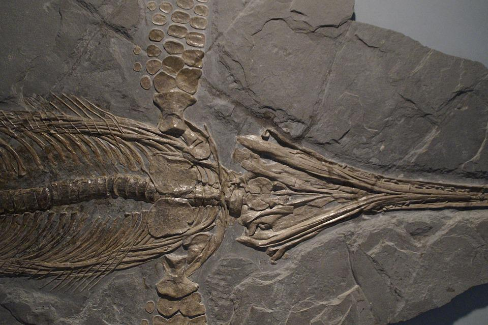 ichthyosaur fossil - photo #26