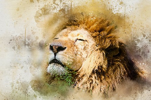 Lion, African Lion, Skeezy Lion, African