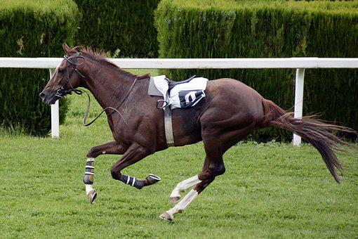 Horse Racing Racecourse Competition Jokey