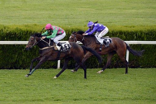 馬のレース, 競馬場, 競争, 冗談好きです, 馬, レース, ギャロップ