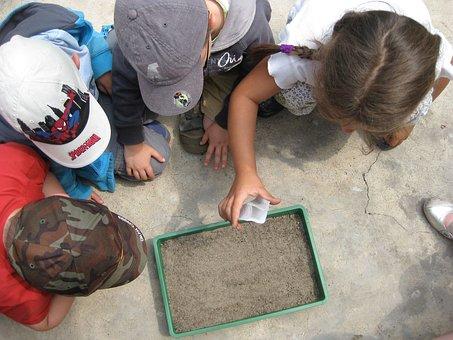 Educação Ambiental, Natureza, Atividades