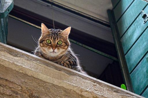 Cat, Window Sill, Window, Mackerel