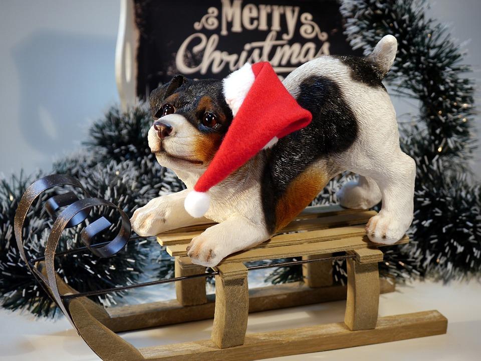Weihnachten Hund Winter · Kostenloses Foto auf Pixabay