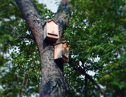 Bat Boxes Bat House Tree Roosting Box Bat