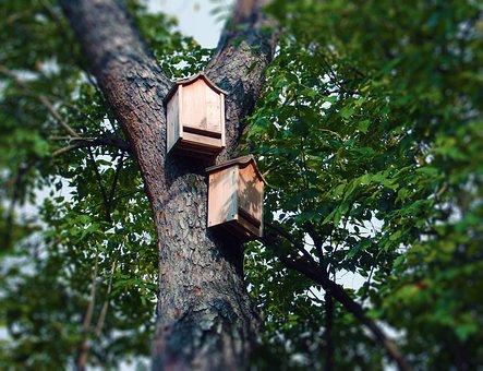 Bat Boxes Bat House Tree Roosting Box Bat