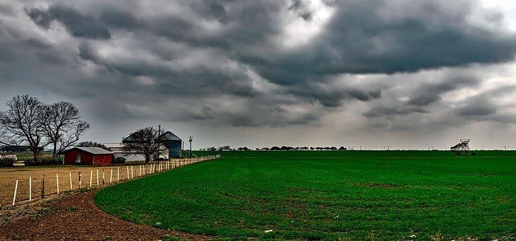Texas, Farm, Ranch, Field, Crop