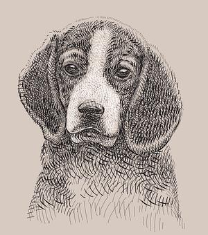 Dog, Doggy, Beagle, Animal, Pet, Young