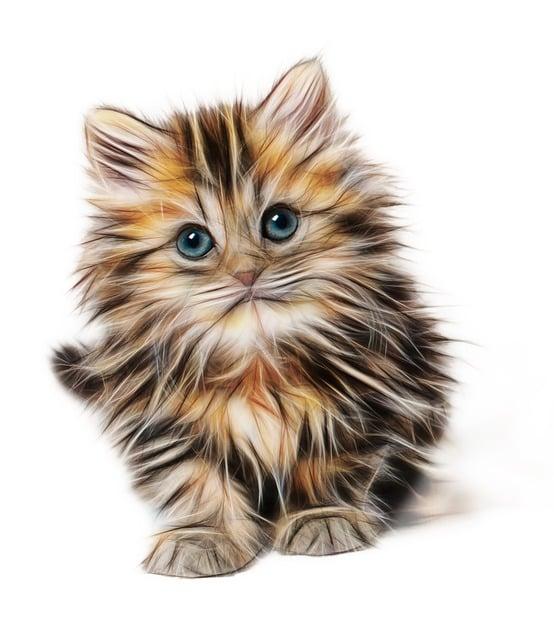 Kitten Mammal Animal · Free image on Pixabay