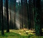 las, słońce, poranek