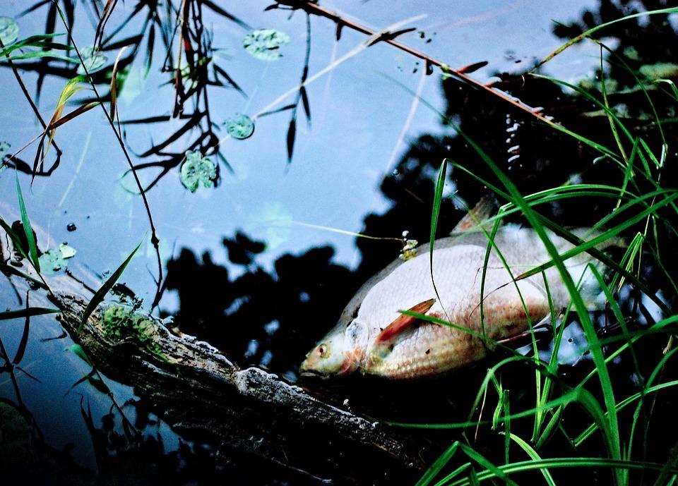 В Западном Казахстане продолжает гибнуть рыба