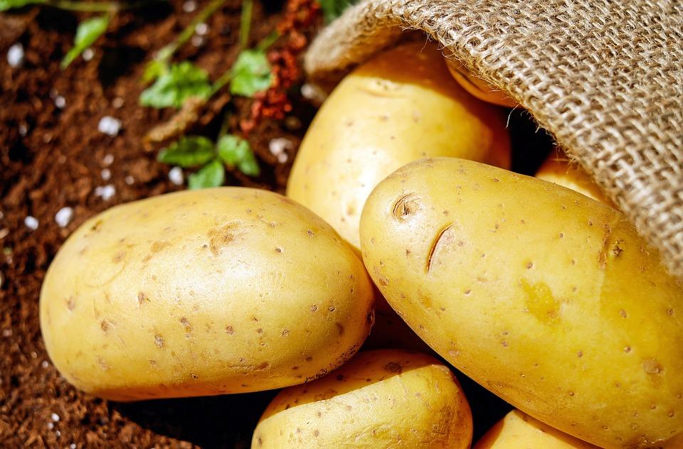 Patate, Verdure, Erdfrucht, Bio, Vendemmia