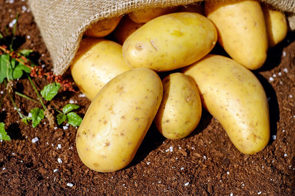 ジャガイモ, 野菜, Erdfrucht, バイオ, 収穫, 庭