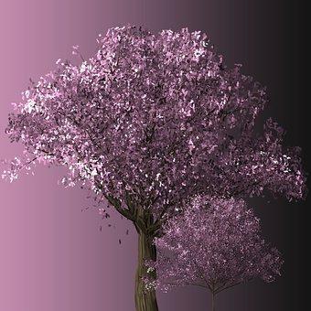 Cherry Blossom Tree Cherry Blossom Trees B