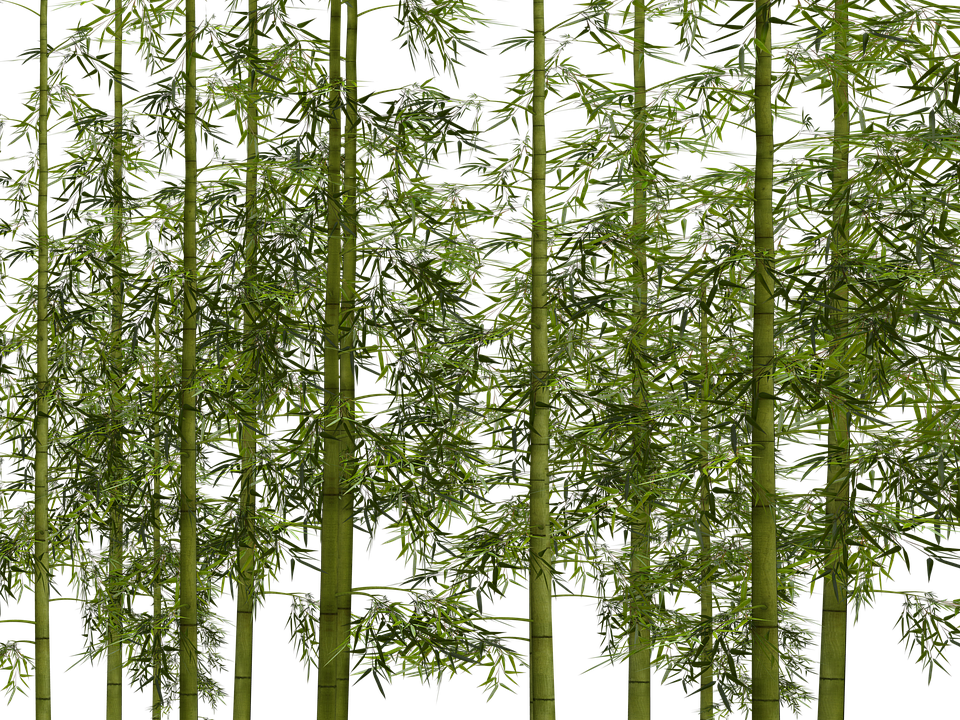 bamboo trees png - photo #16