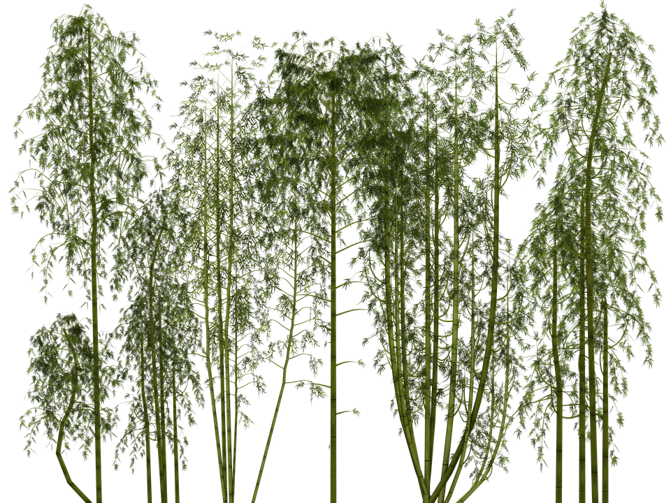 bamboo trees png - photo #7
