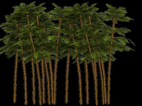 1,000+ Free Bamboo & Plant Images - Pixabay